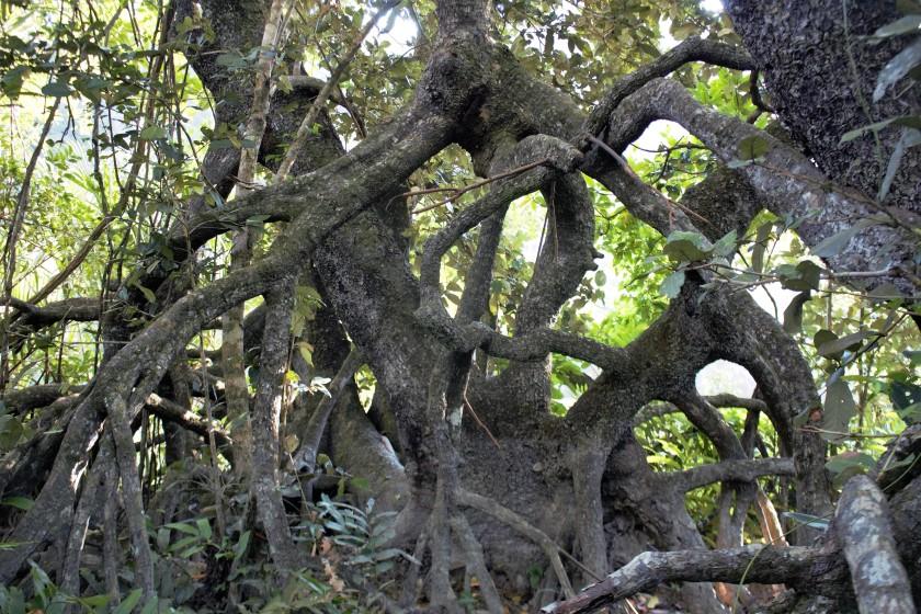 350 Mangrove 2 (2)
